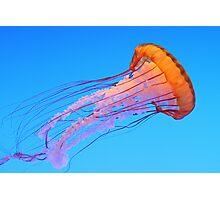 Pacific Sea Nettle Photographic Print