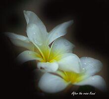 After the rains Kauai by Dennis Begnoche Jr.