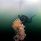 Egg Yolk Jelly with Diver by Greg Amptman