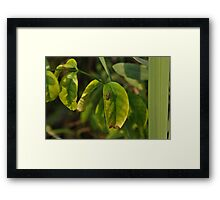 Fly on the greens Framed Print