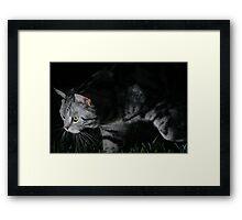 """My Son """"SPIKE"""" Framed Print"""