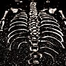 Baby Bones by Leigh Ann Pobiak