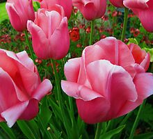 Pink Tulips by Marta Boulden