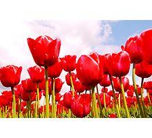 Tulip Fantasy Photographic Print