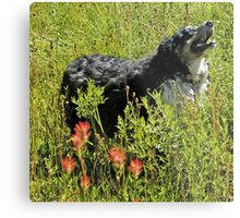 Buddy says, Hey Uncle Denny I found Indian Paintbrushes! Metal Print