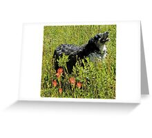 Buddy says, Hey Uncle Denny I found Indian Paintbrushes! Greeting Card