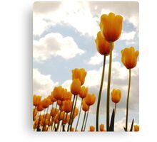 Tulip Friends Canvas Print
