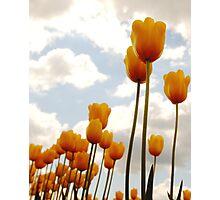 Tulip Friends Photographic Print