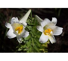 Twin Trumpets Photographic Print