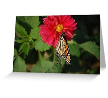 monarch butterfly2 Greeting Card
