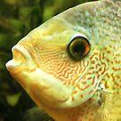 Red Fish, Blue Fish, Green Severum Fish by Jane McDougall
