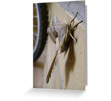 Poplar Hawk-moth (Laothoe populi) Greeting Card