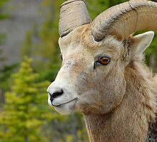 Big Horn Ram by Dyle Warren