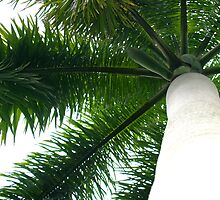 Palm by A Leung
