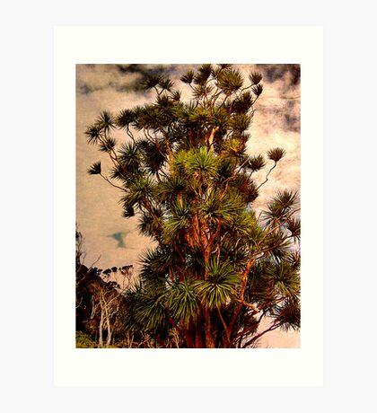 Cabbage Tree - Urquharts Bay. Art Print