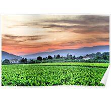 Provence, France vineyard Poster