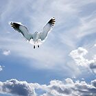 Baltic Bird by Philip Cozzolino