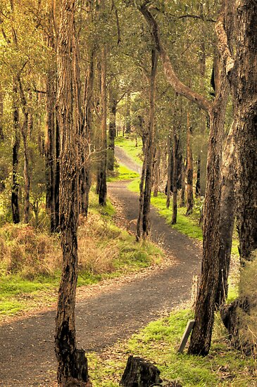 River Trail, Bridgetown, Western Australia by Elaine Teague