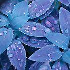 Precious Tears by Judy Will