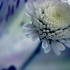 Touch of blue. by Daniii