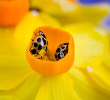 Ladybird Cup. by Steve Chapple