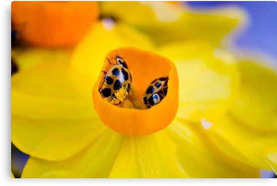 Ladybird Cup. by Steve Chapple