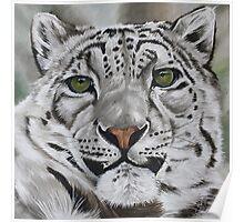 Alert - Snow leopard Poster