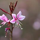 Pretty Pink by JaimeWalsh