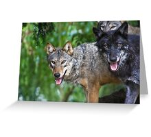 Pack of Timber Wolves ........ Greeting Card