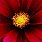 The Flower ! by Elfriede Fulda