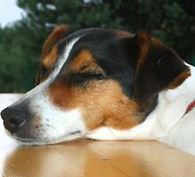 Forty Winks or The Morning After the Night Before! by Martin McKiernan