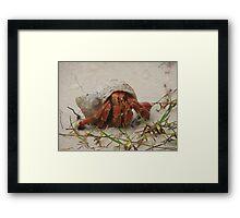 Little Crab Framed Print