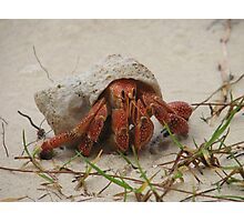 Little Crab Photographic Print