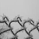 My lonely winter by ViktoryiaN