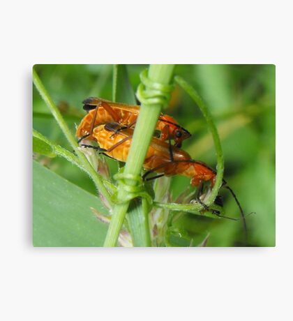 insects:) Canvas Print