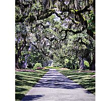 Live Oak Allee Photographic Print