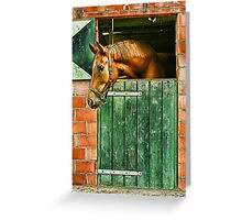 In the stable Greeting Card
