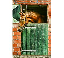 In the stable Photographic Print