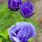 I Love blue Flowers! by Tracy Wazny