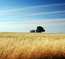 Field in summer by Rick  Senley
