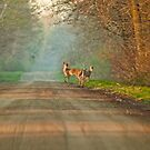 Country Road by Gaby Swanson  Photography