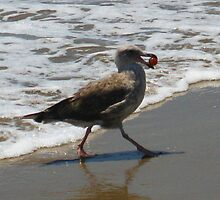 Seagull Playing with a Ball in the Waves by jsmusic