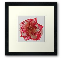 TWO TONE ROSE Framed Print