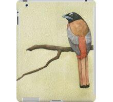Scarlet-backed Trogon iPad Case/Skin