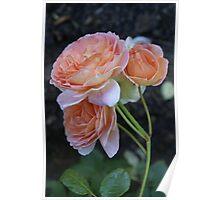 Roses, Roses Poster