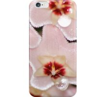Hoya carnosa, Wax Flower iPhone Case/Skin