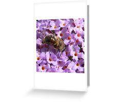 Hungry Bee Greeting Card