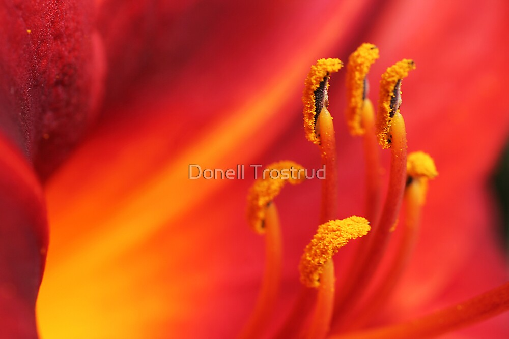 A Blaze of Glory by Donell Trostrud