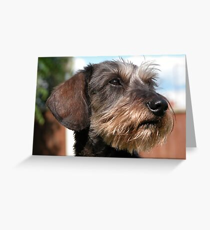 Miniature Wire Haired Dachshund Greeting Card