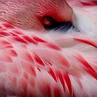 Flamingo #2 by Kiki7000